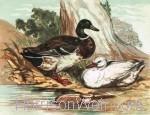 Waterfowl Print Landscape Format