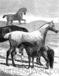 Horse Print Landscape Format