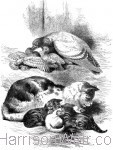 The Children's Friend 1868