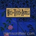 Ways and Tricks - Mary Hooper